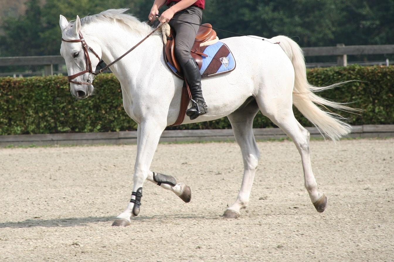 Hoe rijd je je paard aan de teugel? Lees het hier
